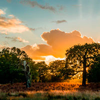 richmond-park-268-400x400